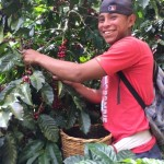 A young coffee picker smiling